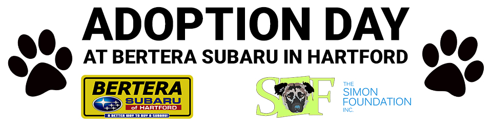 Adoption Day At Bertera Subaru In Hartford Bertera Auto Group Blogs